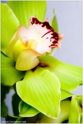 Orchid Intimate Moments